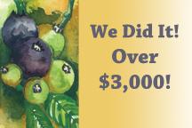blueberries-we-did-it